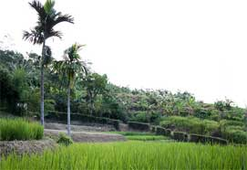 Asianlandscape.jpg